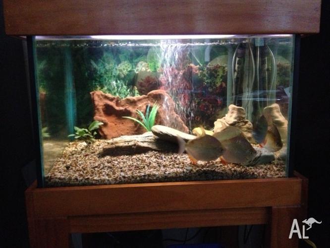 6x2x2 aquarium for sale 6x2x2 aquarium stained cabinet for Fish aquarium for sale