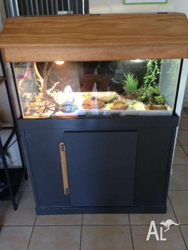 2 female bearded dragons with complete set up