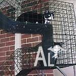 30 +Cat Enclosures on Display at Classic Pet Enclosures