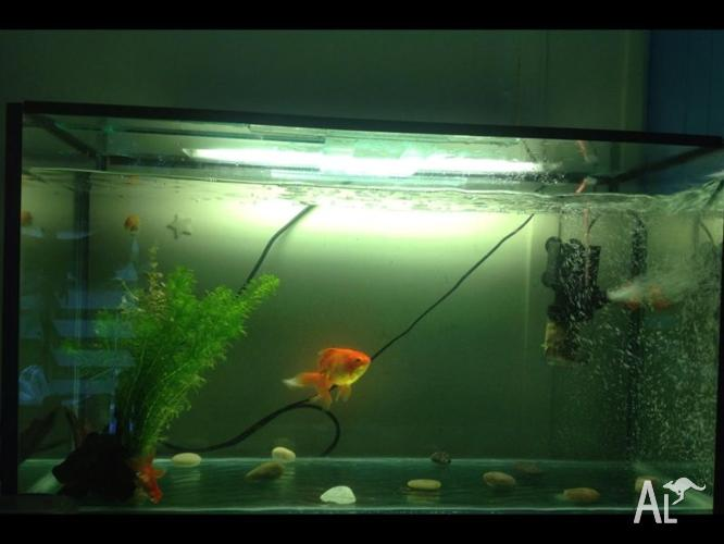 3ft fish tank, filter, air stone + accessories