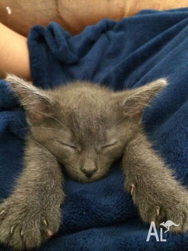4month Old kitten