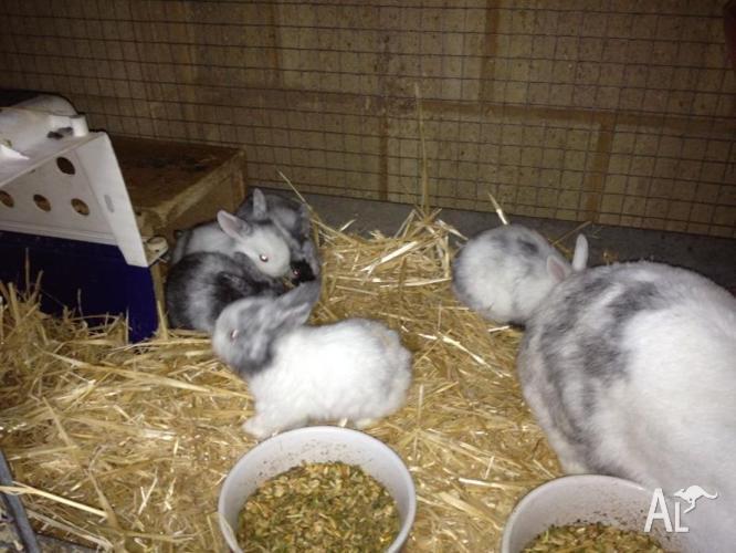 5 Young rabbits