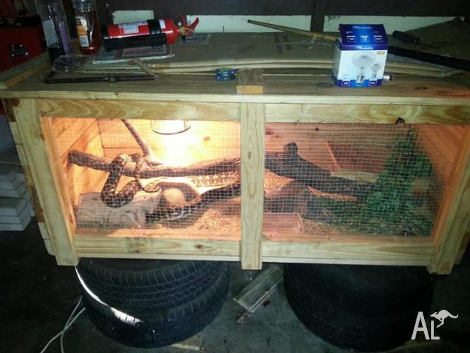 Coastal Carpet Python Enclosure Size - Carpet Vidalondon