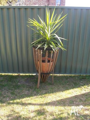 ADVANCED YUCCA IN A CURVED OPEN BARREL PLANTER