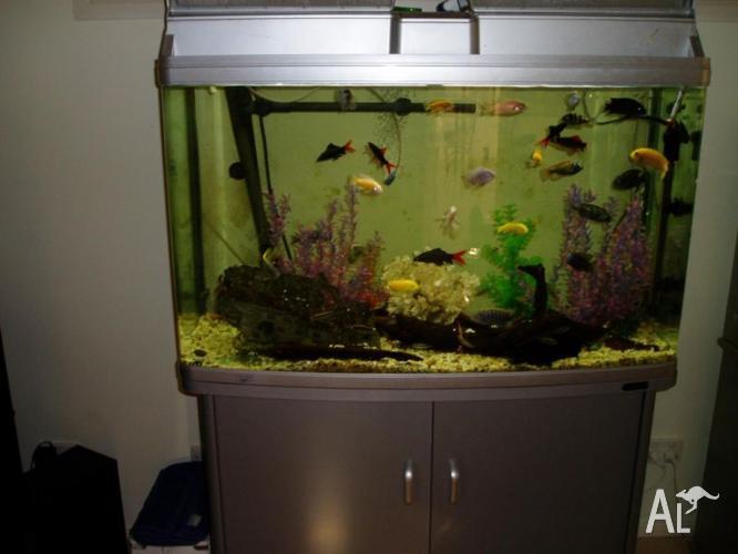 aqua one 980t aquarium tank with accessories