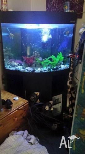 aqua one corner fish tank