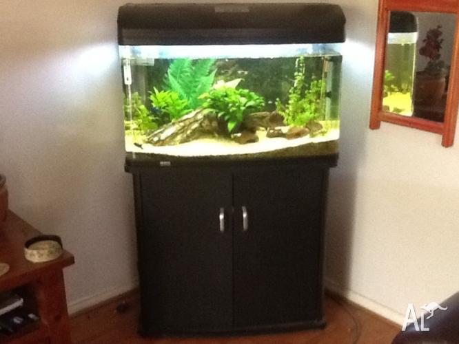 Aquarium Amp Stand Aqua One 850 165 Litres For Sale In