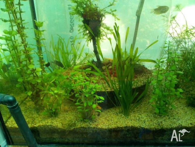 Assorted Aquatic Plants For Sale
