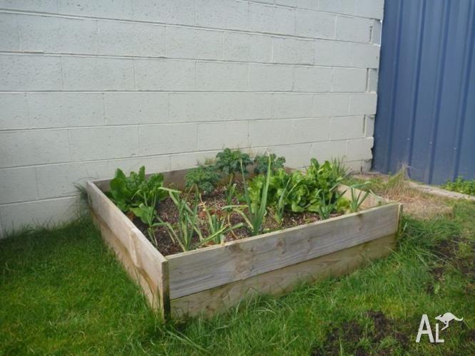 Assorted Pine Garden Beds