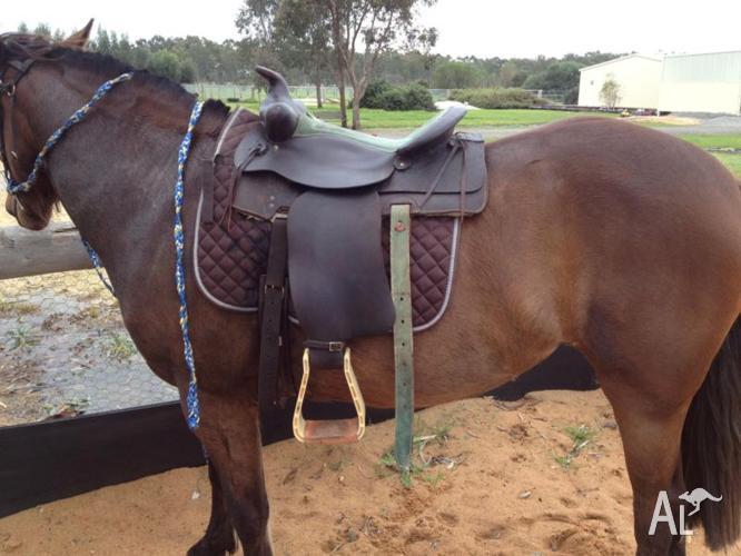 Australian Made 16 Western Saddle