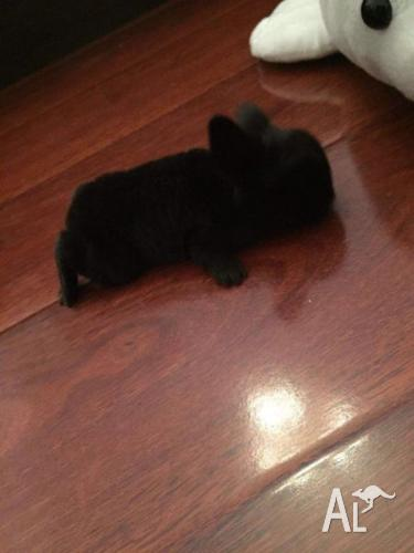 bunny babies for sell cheap cheap