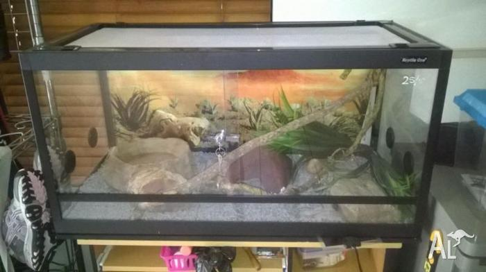 Children's python and enclosure