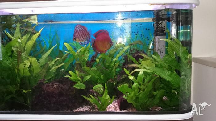 Curved Glass Aquarium with Exotic Tropical Fish.