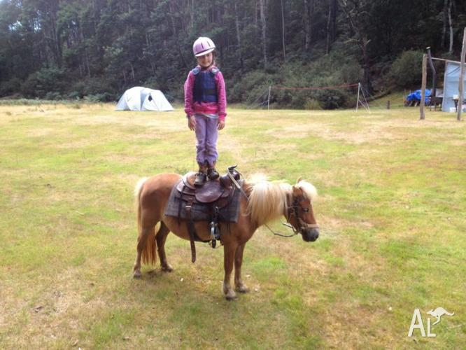 Extremely quite kids pony
