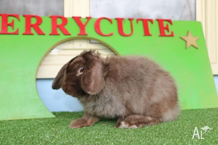 Fancy bunny looking for a home