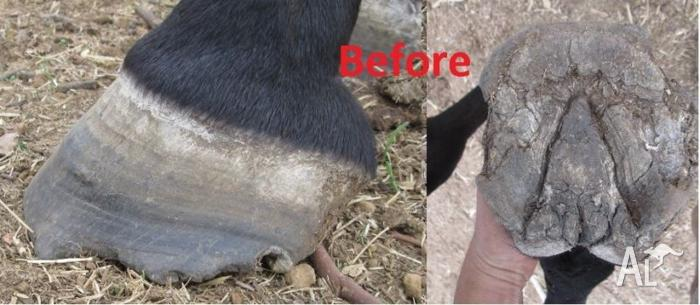 Farrier for hooftrimming available