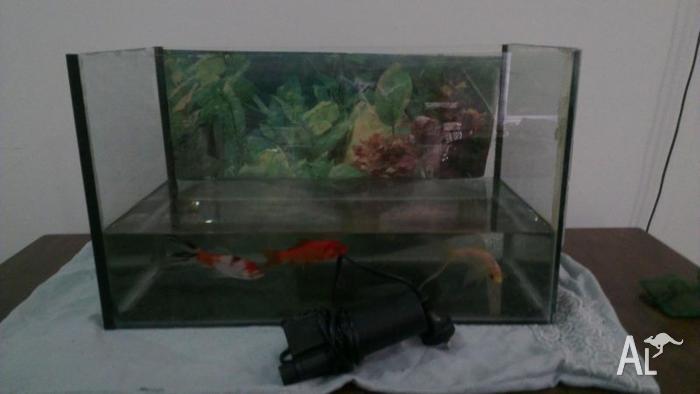 Fish tank + Fish