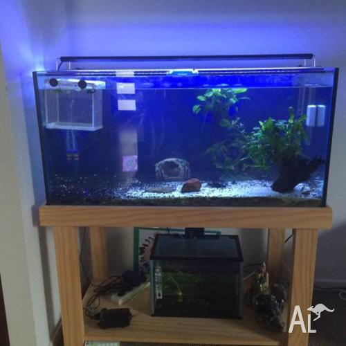 Fish Tank, Stand - 3ft, 180litre