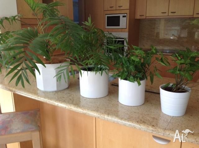 flower pots porcelaine