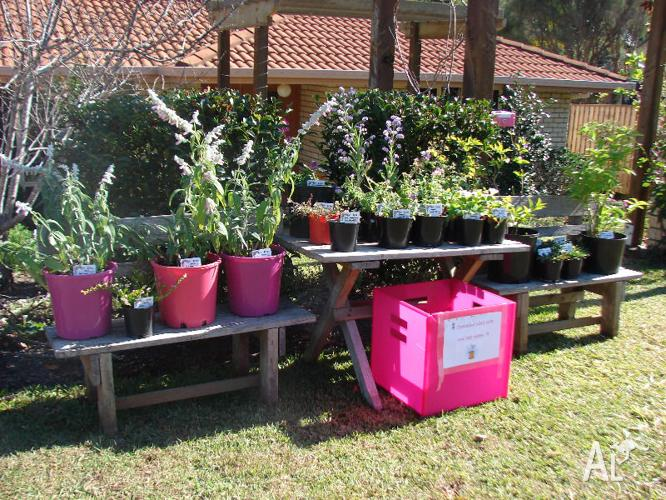 Flowering Potted Plants for Sale