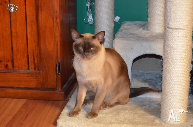 Cat Enclosure For Sale Victoria