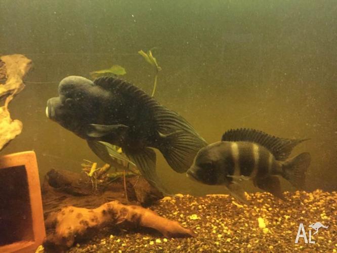 Full aquarium, fish tank, filters, lights and fish.