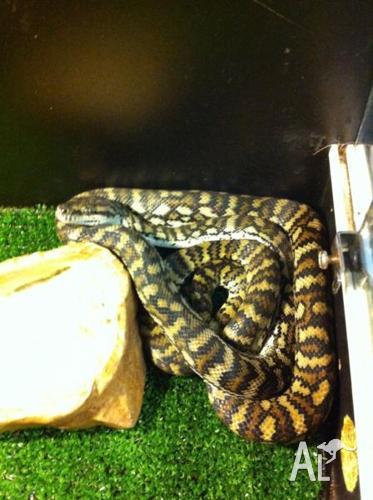 Gammon ranges python Pair
