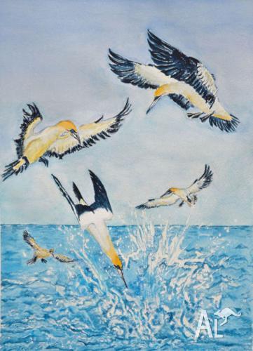 Gannets - watercolour by Sergio Ianniello 51cmx71cm