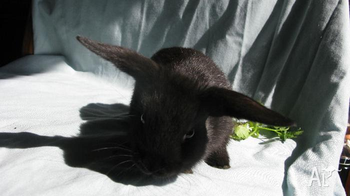Gorgeous, playful baby rabbits for sale! Pet homes only