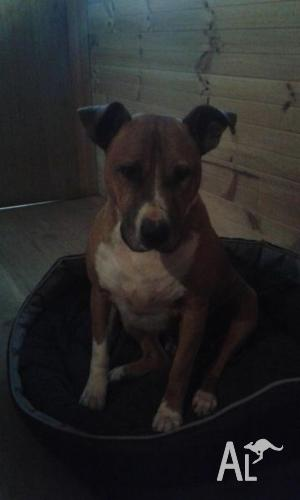 Great friendly dog needs good home