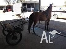 HARNESS RIDING PONY AND CART