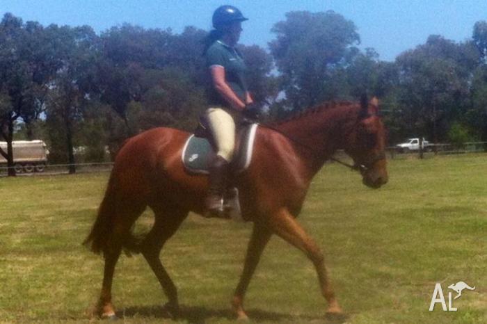 Horse/Pony Education & Exercising