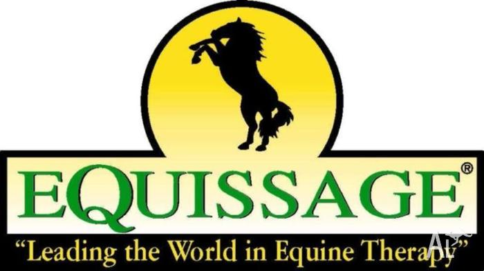 Horse/Pony Massage using Equissage