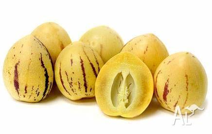 jac rare plants - fruit tree -- pepino -- solanum