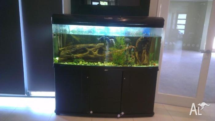 jebo tank - Jebo Aquarium Canister Filter 828 2017 - Fish Tank Maintenance