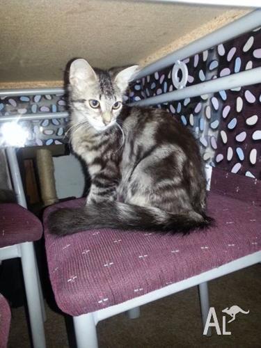 kitten free to good home