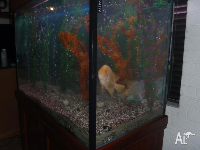 Large Fish Tank with Stand & Hood