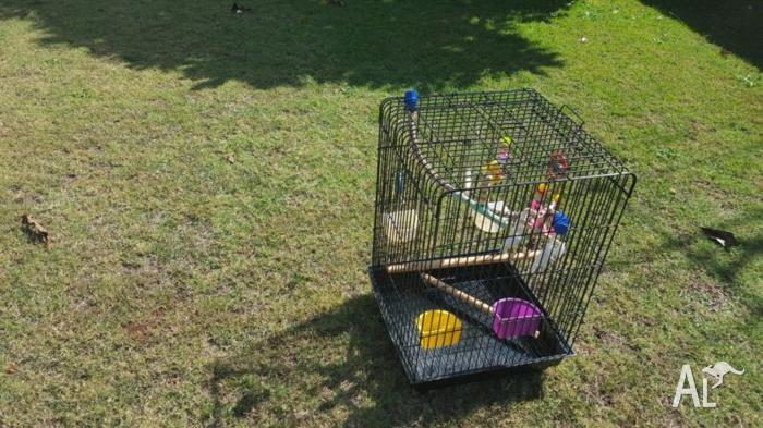 Large Parrot cage for sale- suit conure, cockatiel etc