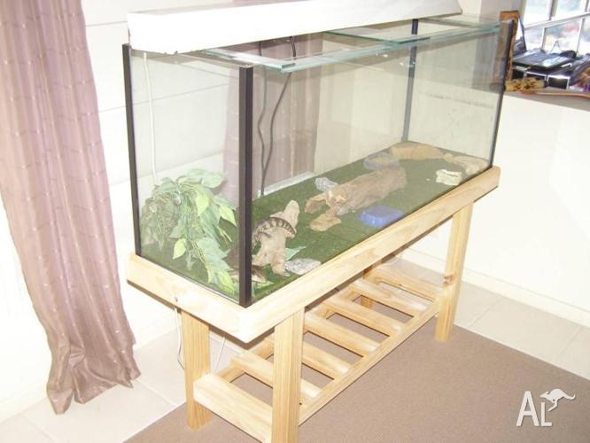 Lizard & enclosure