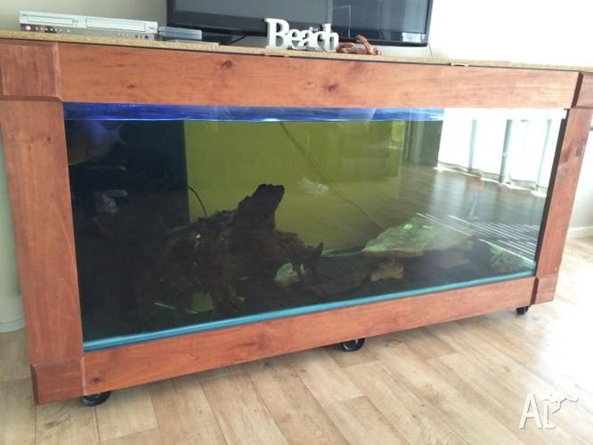 Massive fish tank! Mangrove Jack! Everything included!