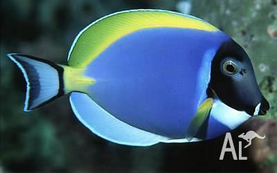 New Marine Fish Shipment from Sri Lanka - Melbourne Tropical Fish