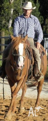 Peter Babic Horse Breaking, Training, Tuition, Lessons