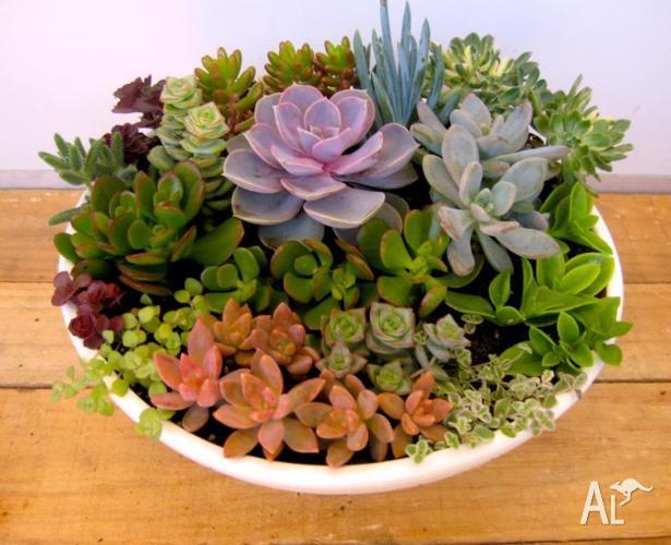Plant Arrangements, Succulents/Indoor Plants in Pots for Sale in ...