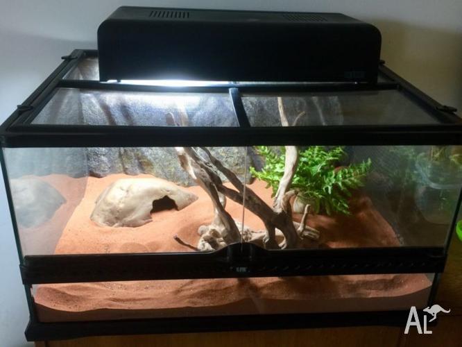 Reptile vivarium/enclosure, ExoTerra