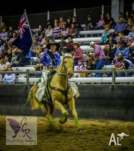 seasoned rodeo horse