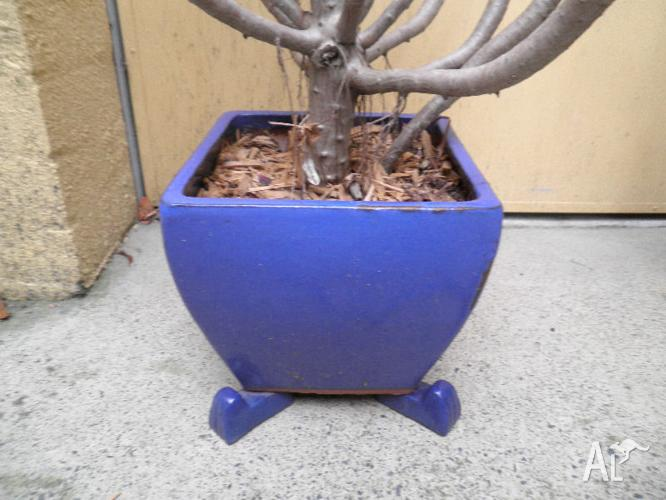 Small Blue Glazed Terracota Pot with optional free
