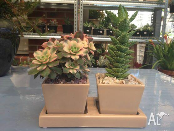 SUCCULENTS/CACTI FOR SALE EVERY WEEKEND