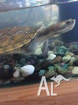 Thompson & his tank!!!