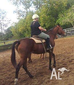 thoroughbred mare