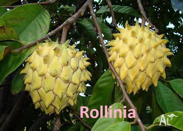 Tropical Fruit Trees and Plants for sale